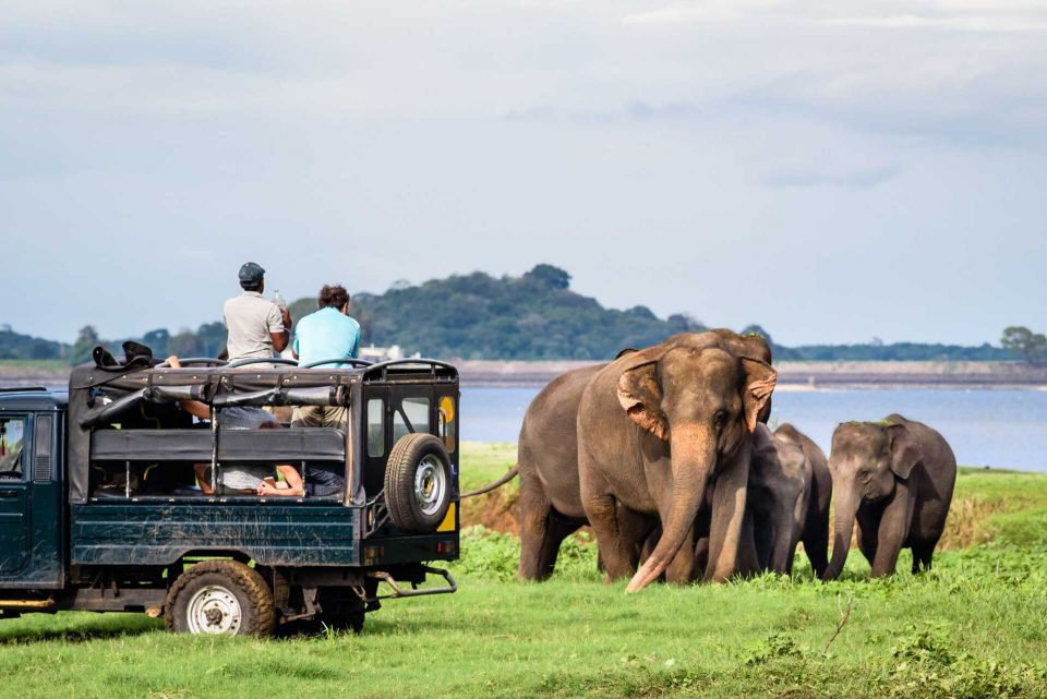All about safari: It's a wild world out there.