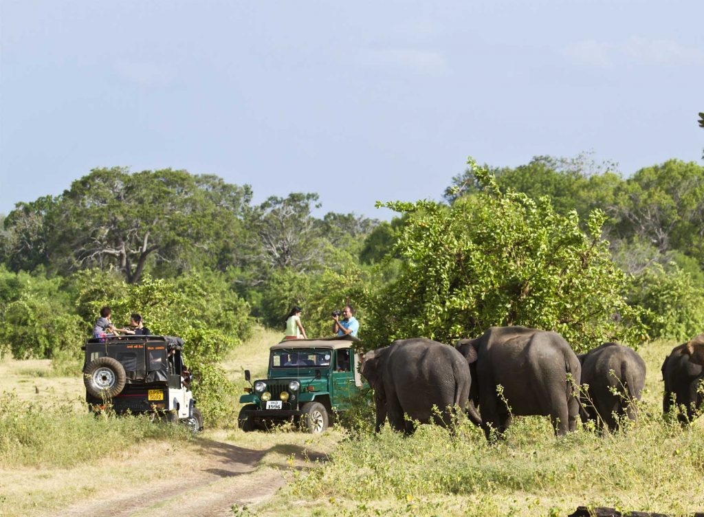 Minneriya National Park Safaris