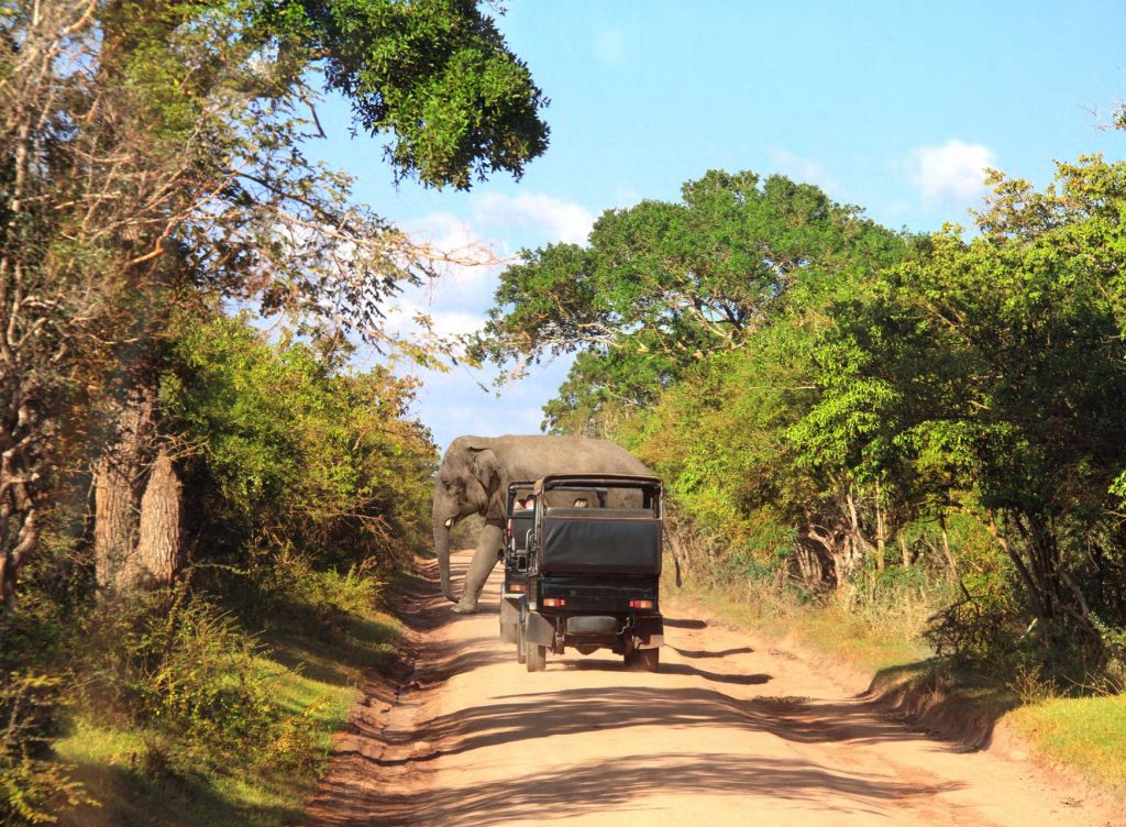 Yala National Park Safaris