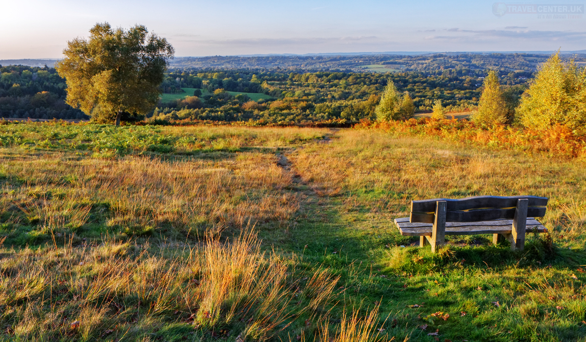 Cities to visit in 2021 - Ashdown Forest