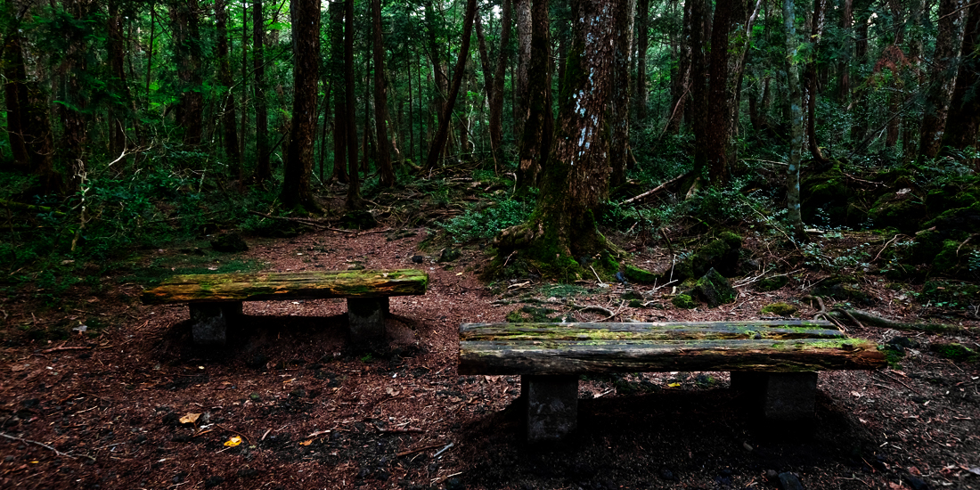 scariest places on earth - Aokigahara Forest