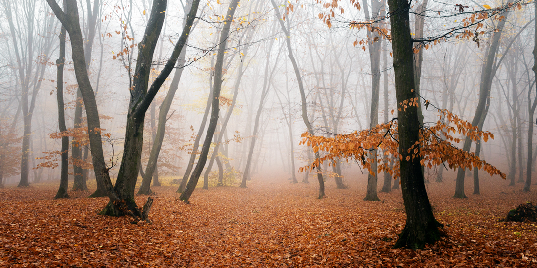 scariest places on earth - Hoia-baciu forest